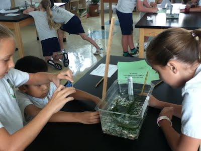 Ecosystem observation and measurements
